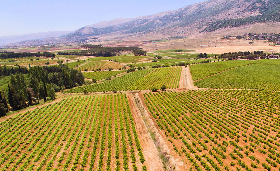 Markene til Musar i Bekaa dalen. foto ©️ Ch. Musar