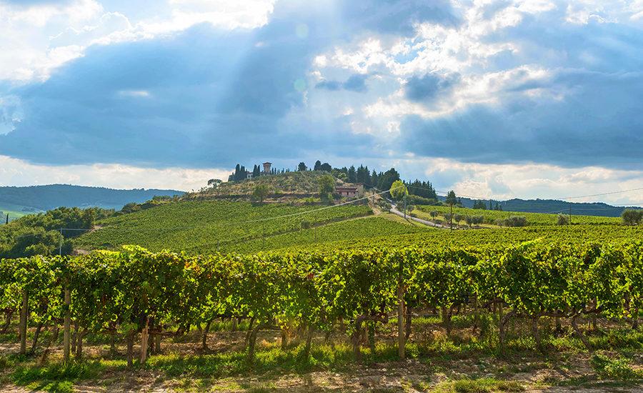 Vicchiomaggio ligger på en bakketopp omsluttet av vinranker. foto Vicchiomaggio
